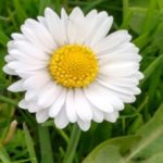 Profilbild von Bluemchen